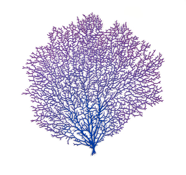 Venus Sea Fan (Gorgonia flabellum)