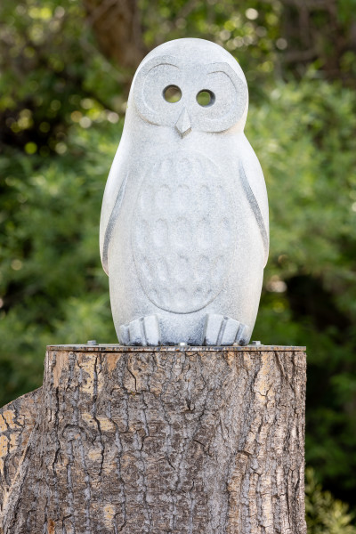 See Through Other Eyes: Spotted Owl