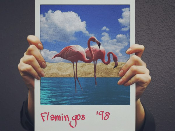 Flamingos '98