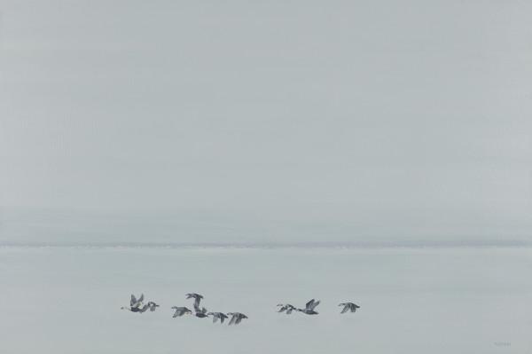 Eiders landing