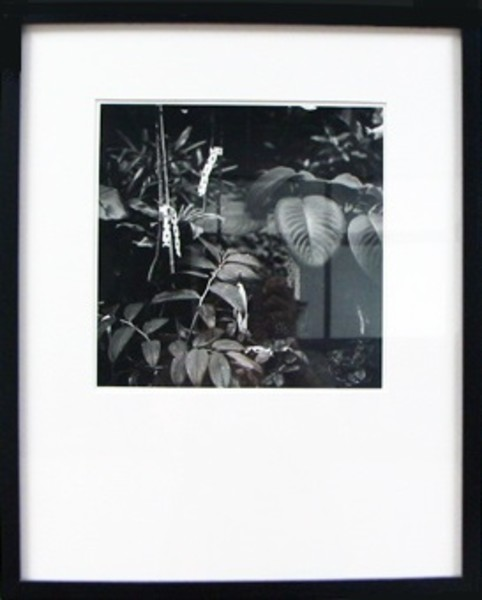 Untitled #15, from the Divide and Conquer series, 1999