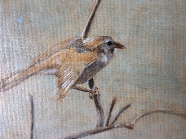 Sparrow Study