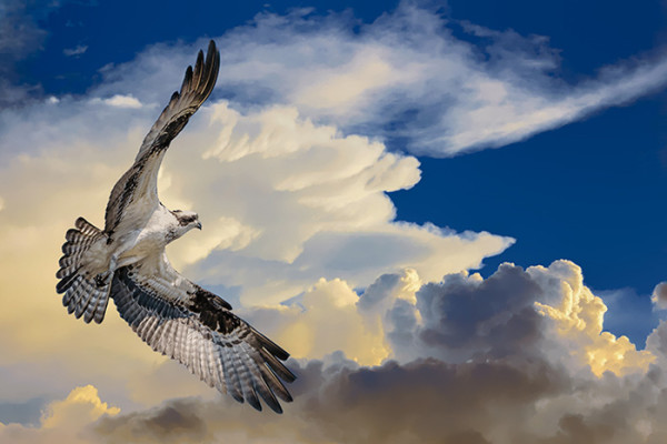 """2nd Place – Richard Higgins - """"Into The Light"""" – www.naturesvisionphotography.com"""
