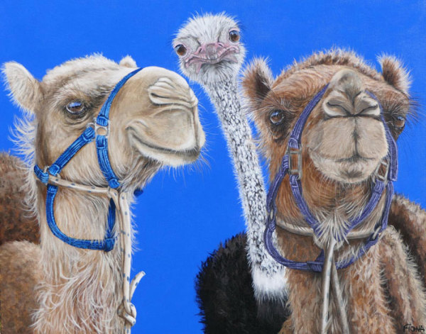 "7th Place – Fiona Groom - ""You Aint No Camel"" – www.fmgfionagroomvisualartist.com"