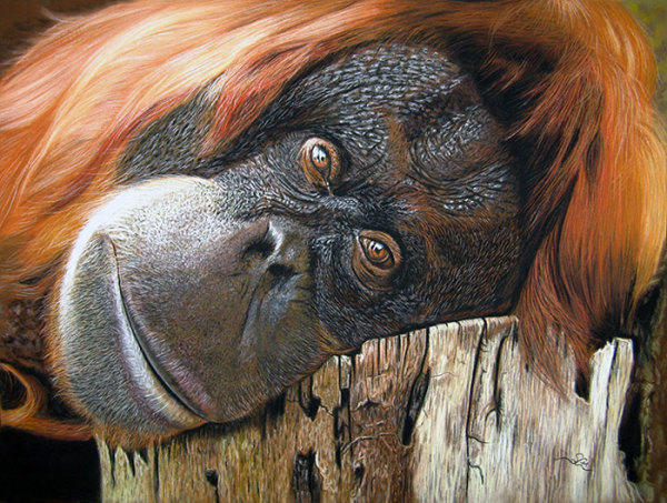 """9th Place – Overall - Sabine Lackner - """"Thinking of You"""" – www.tier-zeichnungen.at"""