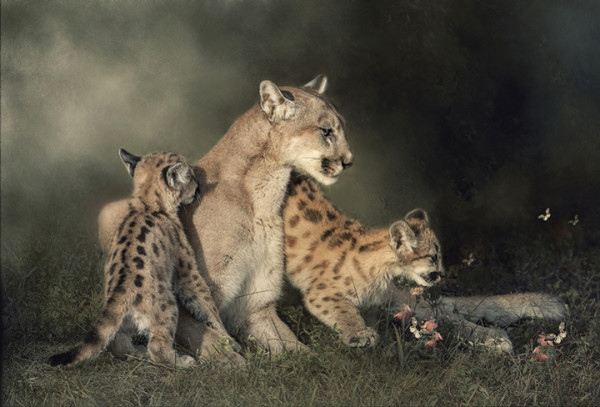 "5th Place - Lou Ann Goodrich - ""Cougar and Kittens"" - www.louanngoodrich-photoartist.com"