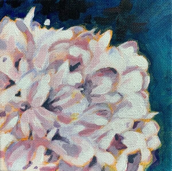 Hydrangea series: Pink