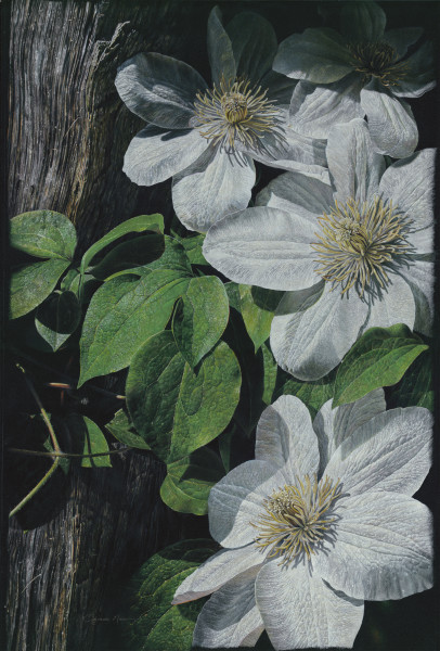 """""""Cascading Clematis"""""""