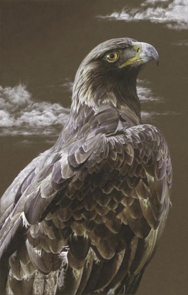 Golden Eagle Majesty 2