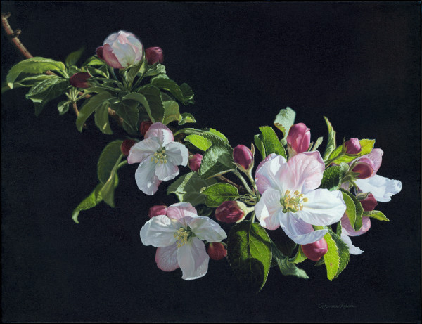 """""""Spring's Welcome to All""""--apple blossom"""