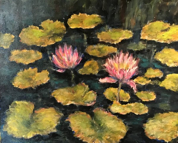 Water Lilies at Brookgreen