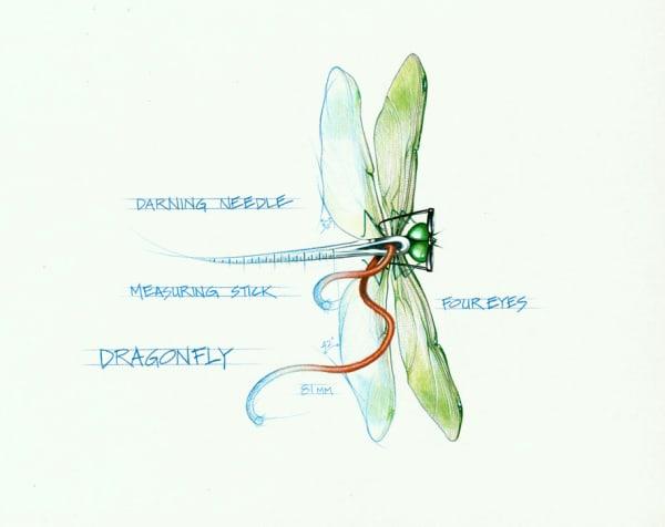 Dragonfly (Framed Original)