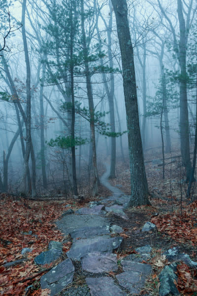 Foggy Path (Framed Photograph)