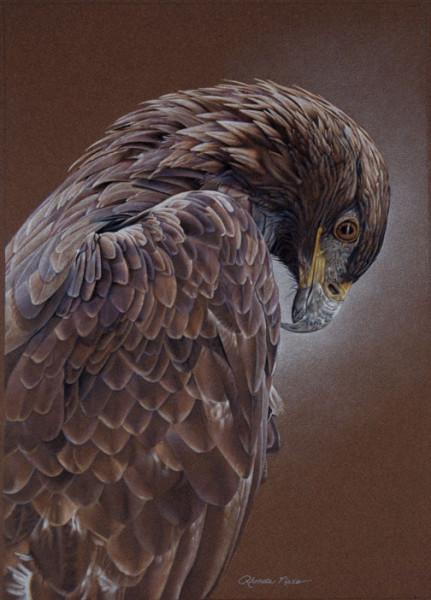 Shadow Hills Eagle