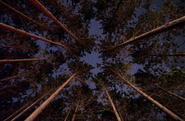 Night Sky Pines (unframed print)