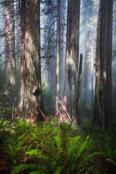 Forest Light (Framed photo)