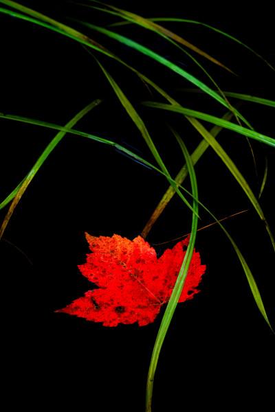 Autumn Rain (Framed photo)