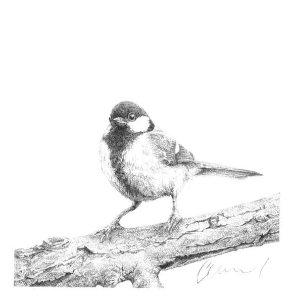 Gardenbird #4 Bluetit