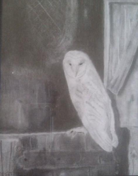 First Barn Owl