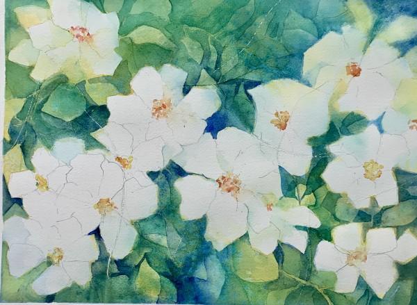 Graceful Gardenias