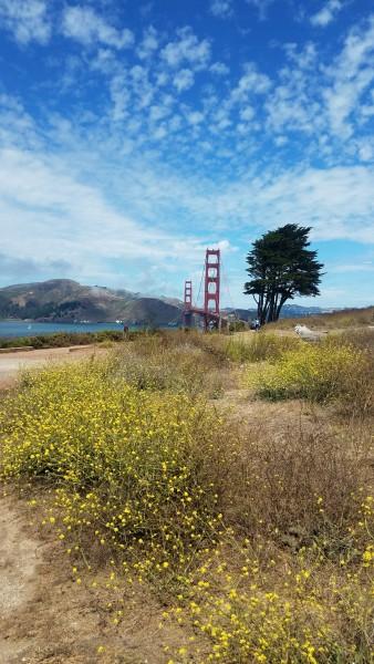 Wild Flowers Golden Gate Summer