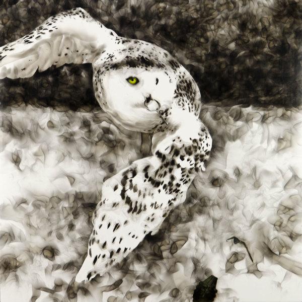 Smoky Owl, 2017