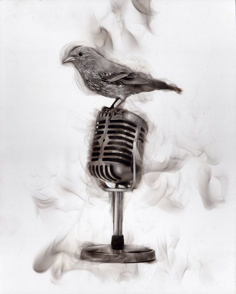 Bird on mic, 2016