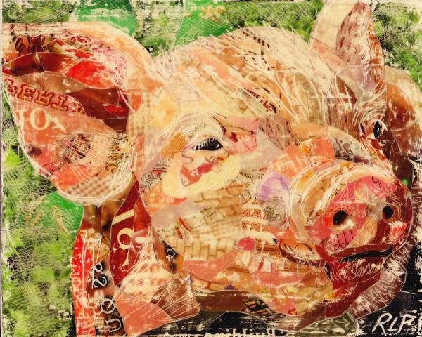 Pig Study #2