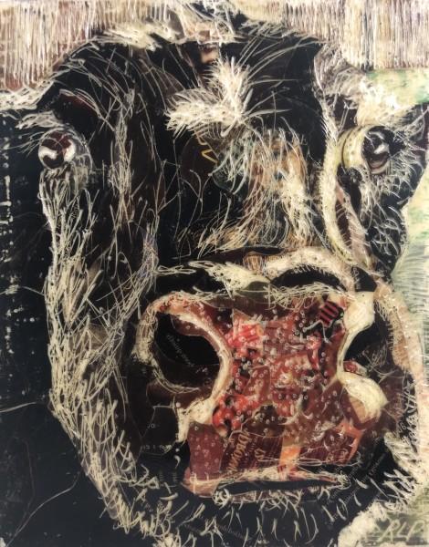 Cow Study #3