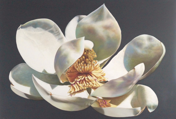 Majestic Magnolia - Commission