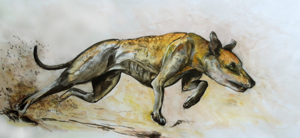 Greyhound Turning