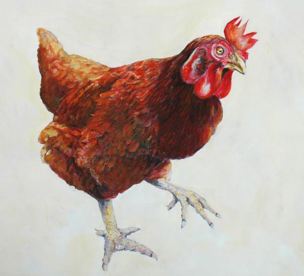 Steady ( Domestic Chicken)