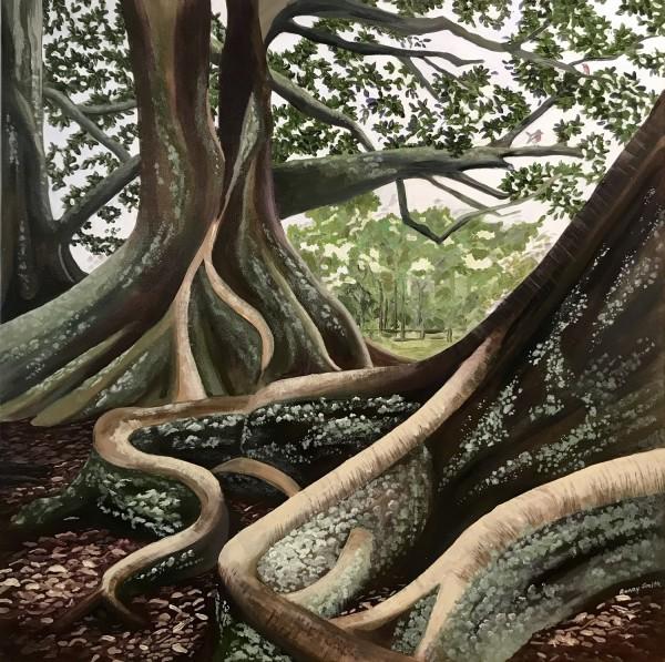 Fig Trees ('Norfolk Island series' )