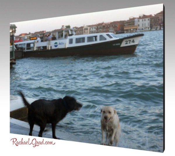 2 Dogs Taking a Canal Swim, Venice, Italy