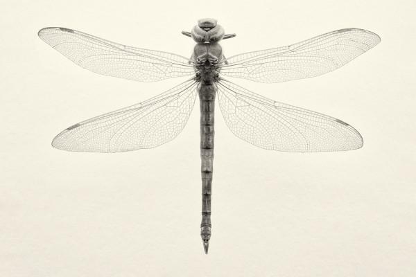 Odonata I