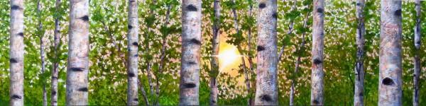 Sun Through Birches