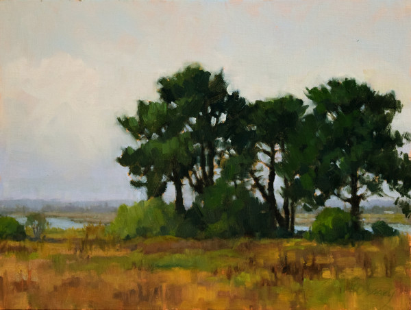 Arcata Marsh Pines