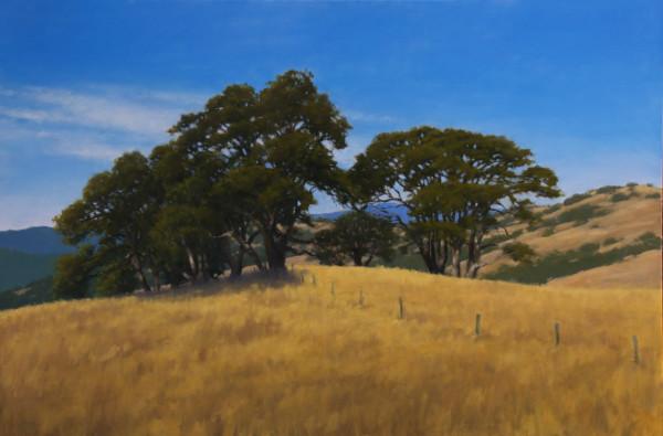 Oak Knoll -  Redwood National Park