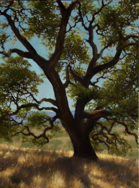 Oak Portrait