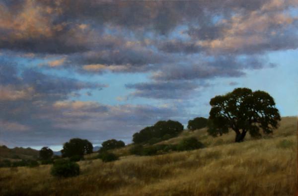 Oaks In Evening Light