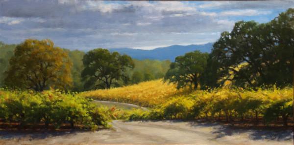 Vineyard Oaks