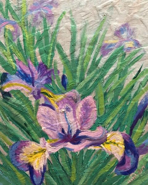 Conne River Iris