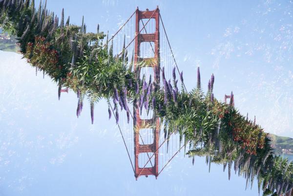 Golden Gate #3