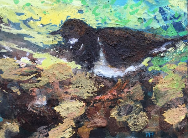 Turnstone at Dawn, Sidmouth