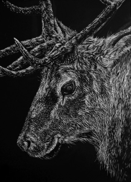 The Sly Elk