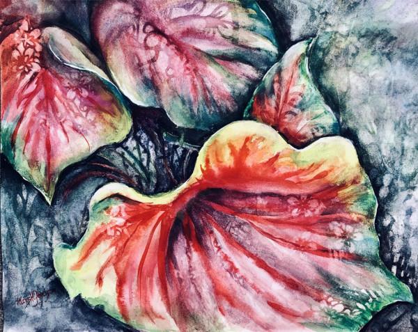 Calladiums