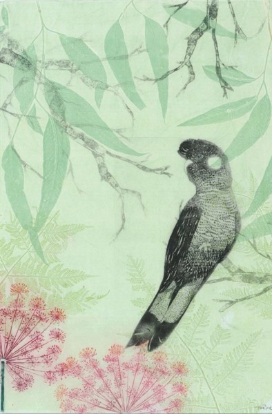 King Black Cockatoo and pink garden lace
