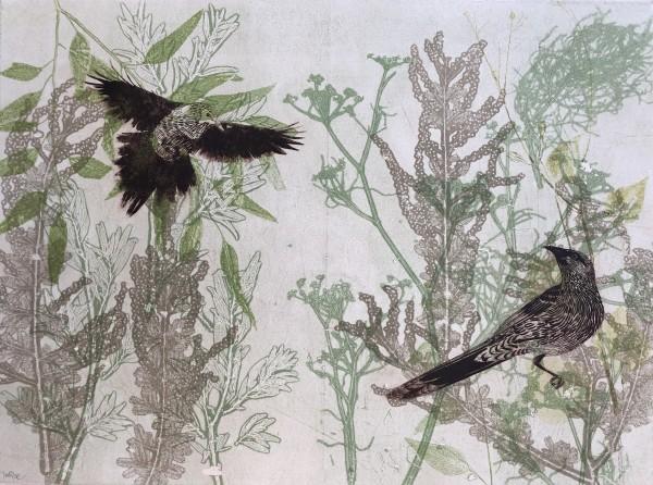 The playful wattlebirds