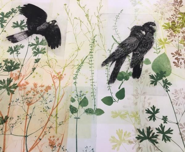 Bird Watching, Black Cockatoos