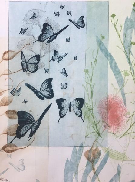 A flutter of butterflies and hakea flower in bloom